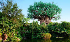 Animal Kingdom theme park at Walt Disney World Resort.